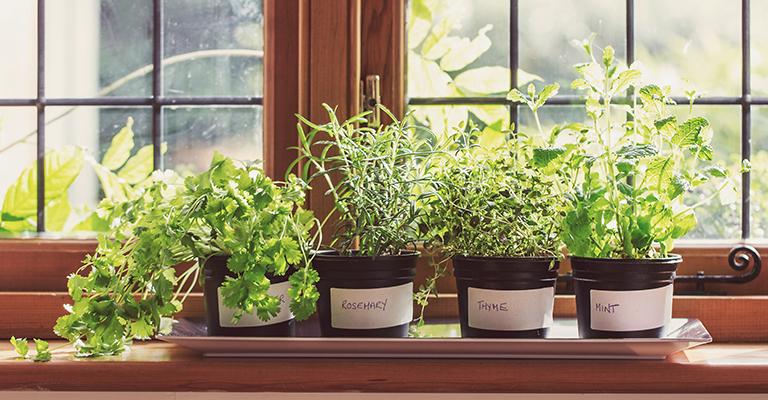 faire pousser ses fines herbes. Black Bedroom Furniture Sets. Home Design Ideas