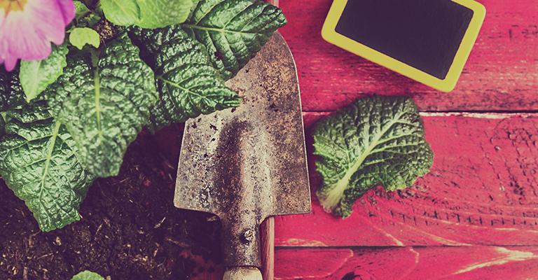 Conseils pour d buter en jardinage for Conseils en jardinage
