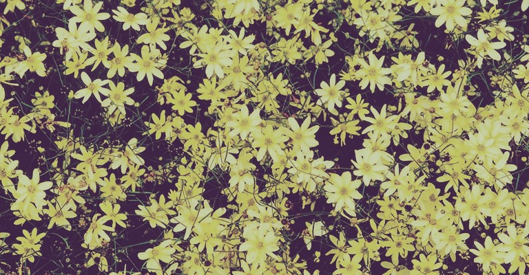 Vous Voulez Des Plates Bandes Toujours Fleuries, Sans Avoir à Replanter  Chaque Printemps ? Alors Optez Donc Pour Les Deux Vivaces à Floraison  Prolongée ...