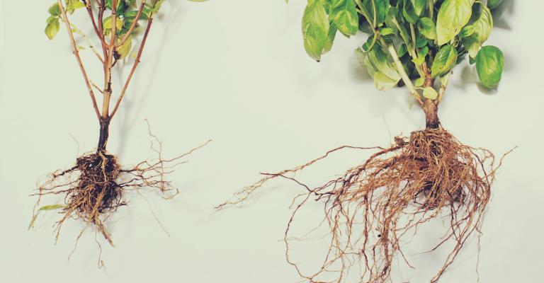 mycorrhizal relationship definition google