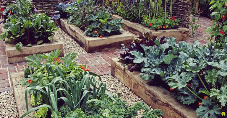 Compagnonnage au potager comment associer les plantes - Comment planter des framboisiers ...