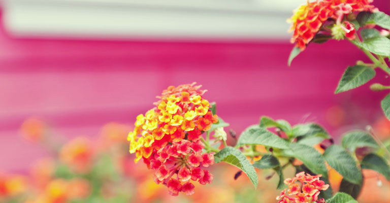 Comment planifier son jardin pour un maximum de fleurs au for Planifier son jardin