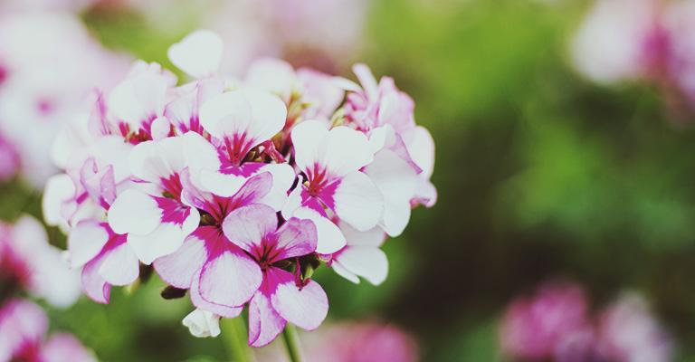 plantes d 39 ext rieur faciles cultiver pour un jardin r ussi. Black Bedroom Furniture Sets. Home Design Ideas