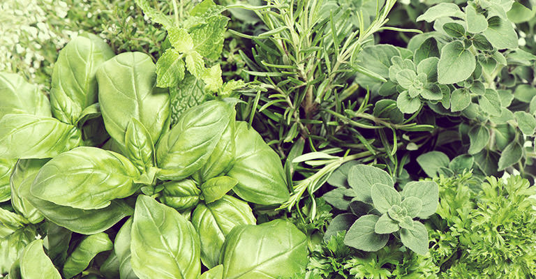 """Parsley, sage, rosemary and thyme"" are not only well-known song lyrics, but common herbs used to season a variety of our foods."