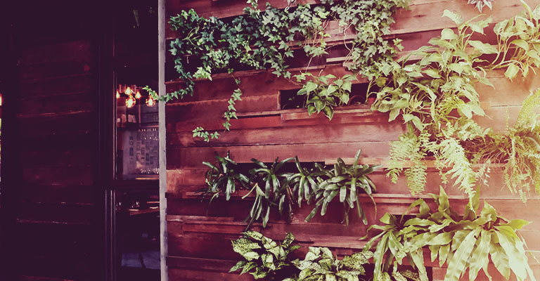 Vertical garden on wooden wall with trees
