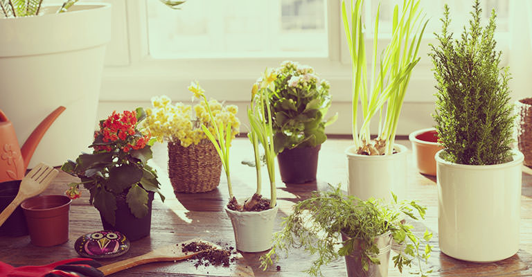 Indoor plants need to good potting mix